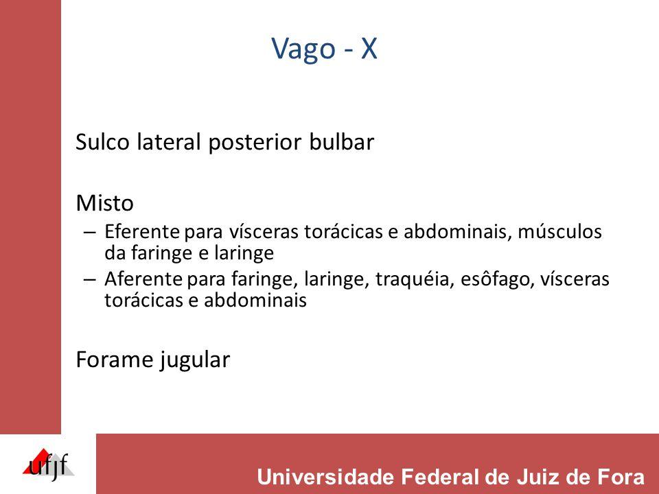 Vago - X Sulco lateral posterior bulbar Misto Forame jugular