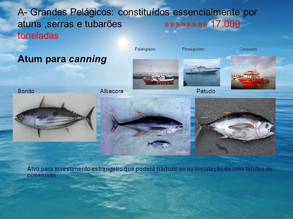 A- Grandes Pelágicos: constituídos essencialmente por atuns ,serras e tubarões »»»»»»»» 17.000 toneladas Palangreiro Perseguidor Cerqueiro Atum para canning Bonito Albacora Patudo