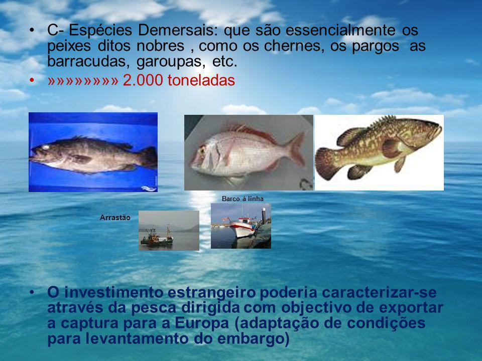 C- Espécies Demersais: que são essencialmente os peixes ditos nobres , como os chernes, os pargos as barracudas, garoupas, etc.
