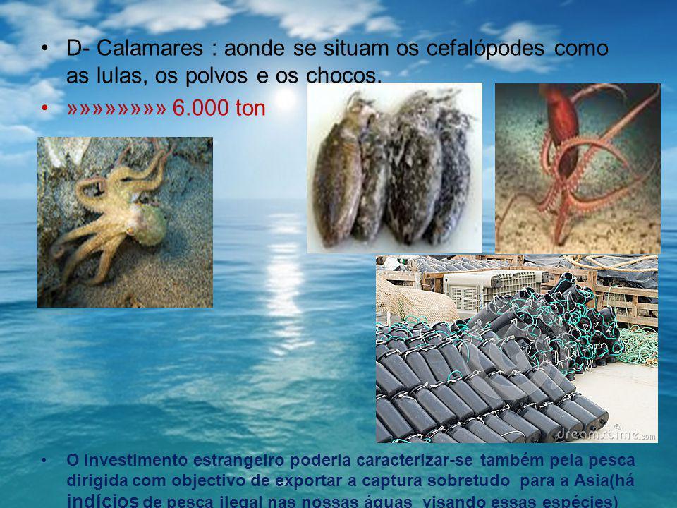D- Calamares : aonde se situam os cefalópodes como as lulas, os polvos e os chocos.