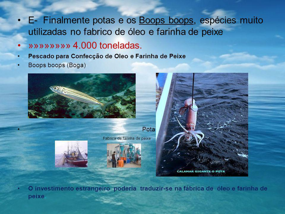 E- Finalmente potas e os Boops boops, espécies muito utilizadas no fabrico de óleo e farinha de peixe