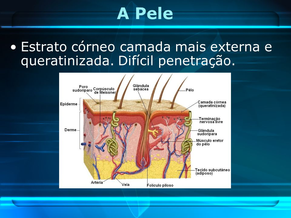 A Pele Estrato córneo camada mais externa e queratinizada. Difícil penetração.