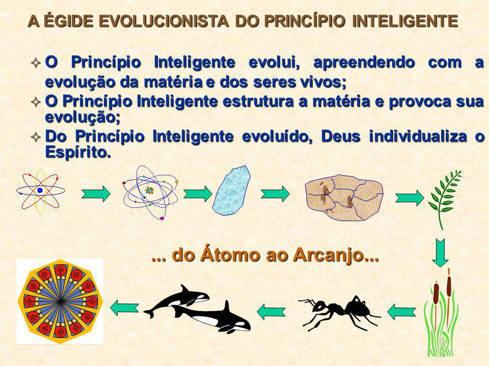 A ÉGIDE EVOLUCIONISTA DO PRINCÍPIO INTELIGENTE