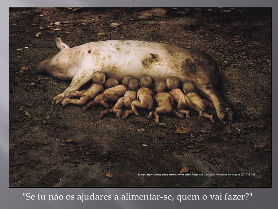 Se tu não os ajudares a alimentar-se, quem o vai fazer