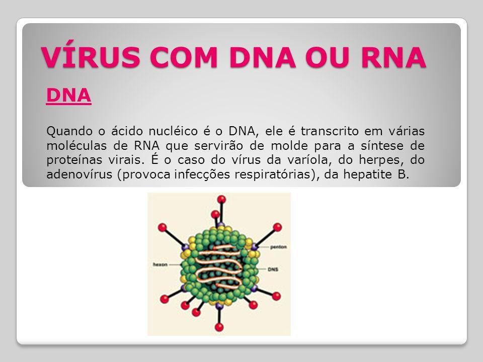 VÍRUS COM DNA OU RNA DNA.