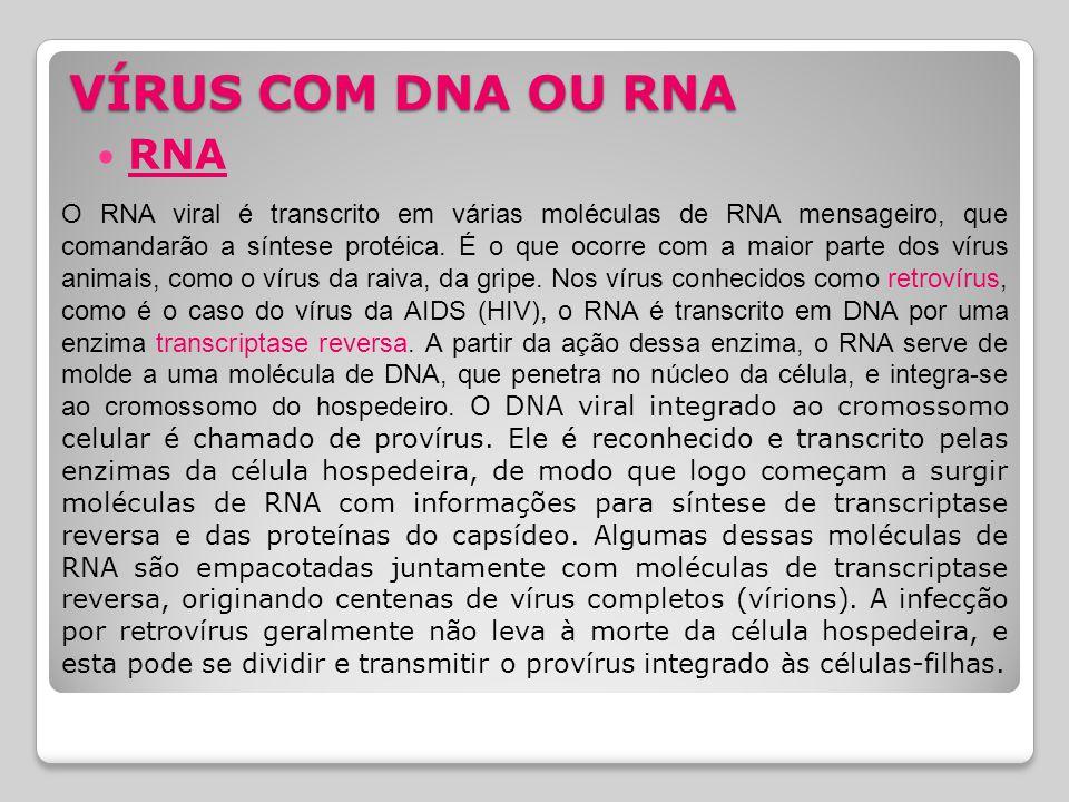 VÍRUS COM DNA OU RNA RNA.