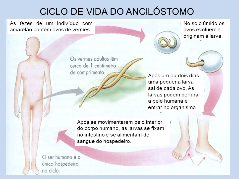 CICLO DE VIDA DO ANCILÓSTOMO
