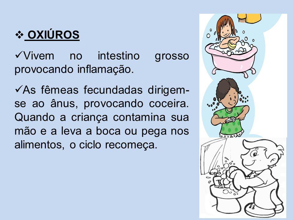 OXIÚROS Vivem no intestino grosso provocando inflamação.