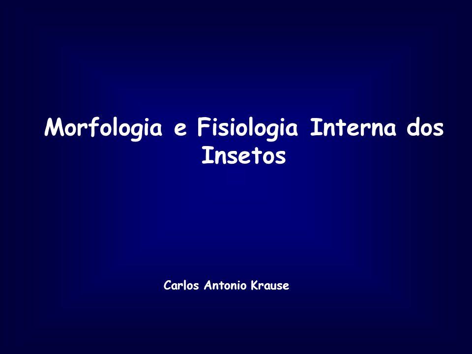 Morfologia e Fisiologia Interna dos Insetos