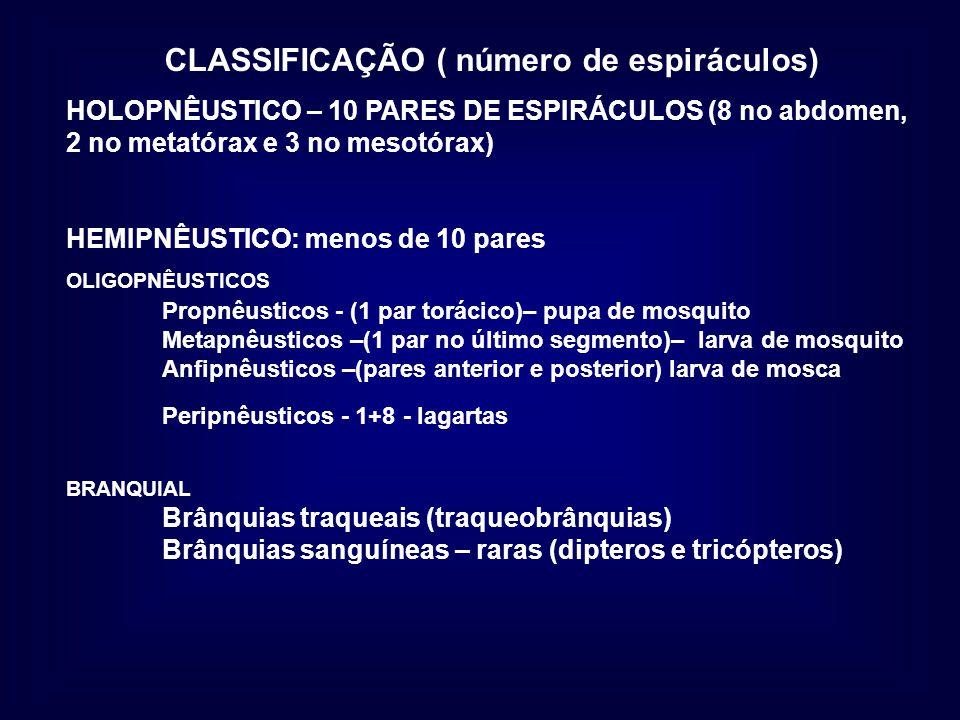 CLASSIFICAÇÃO ( número de espiráculos)