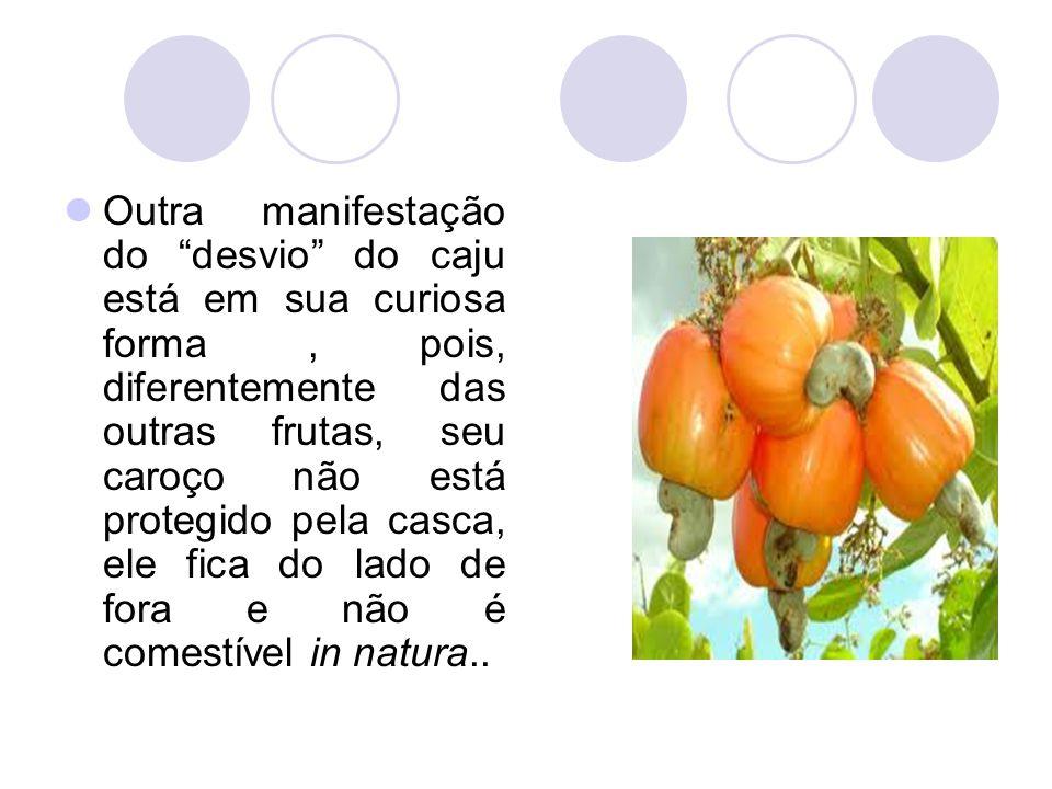 Outra manifestação do desvio do caju está em sua curiosa forma , pois, diferentemente das outras frutas, seu caroço não está protegido pela casca, ele fica do lado de fora e não é comestível in natura..