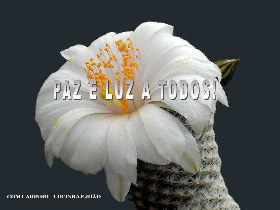 PAZ E LUZ A TODOS! COM CARINHO – LUCINHA E JOÃO
