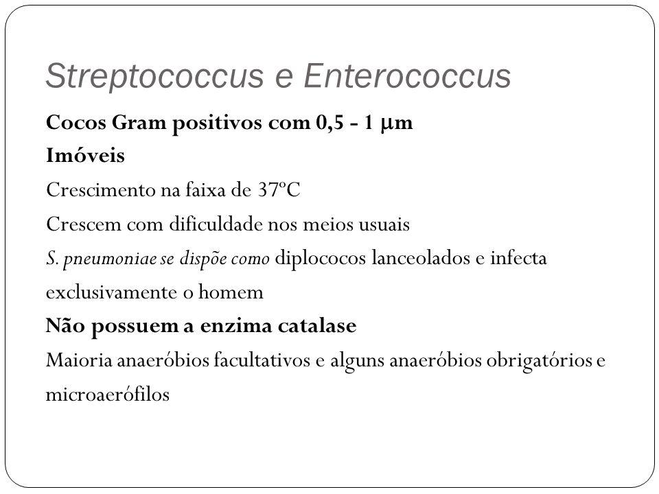 Streptococcus e Enterococcus