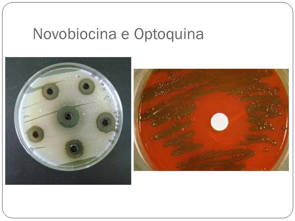 Novobiocina e Optoquina