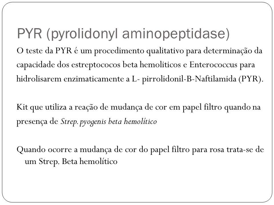 PYR (pyrolidonyl aminopeptidase)