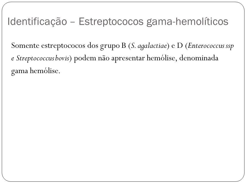 Identificação – Estreptococos gama-hemolíticos