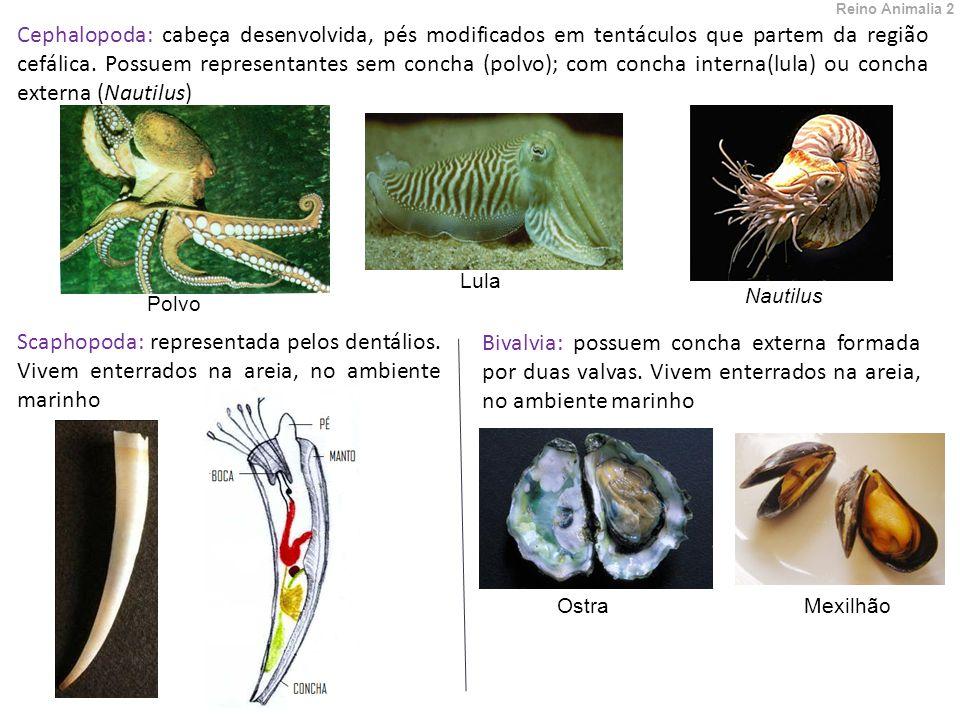 Reino Animalia 2