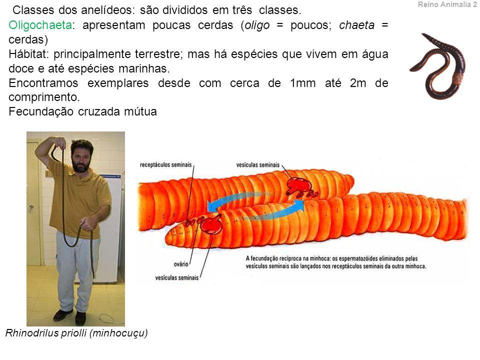 Classes dos anelídeos: são divididos em três classes.