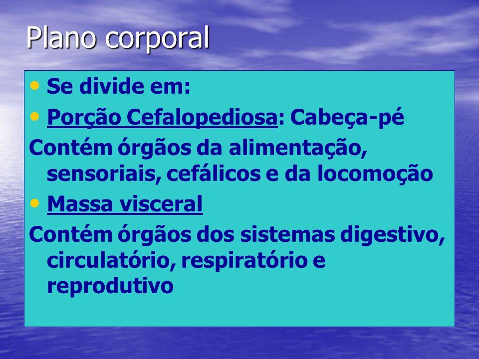 Plano corporal Se divide em: Porção Cefalopediosa: Cabeça-pé