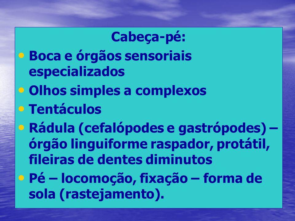 Cabeça-pé: Boca e órgãos sensoriais especializados. Olhos simples a complexos. Tentáculos.