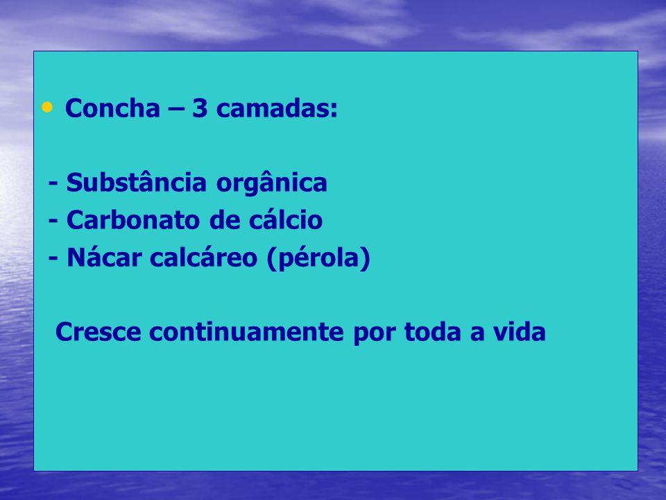 Concha – 3 camadas: - Substância orgânica. - Carbonato de cálcio.