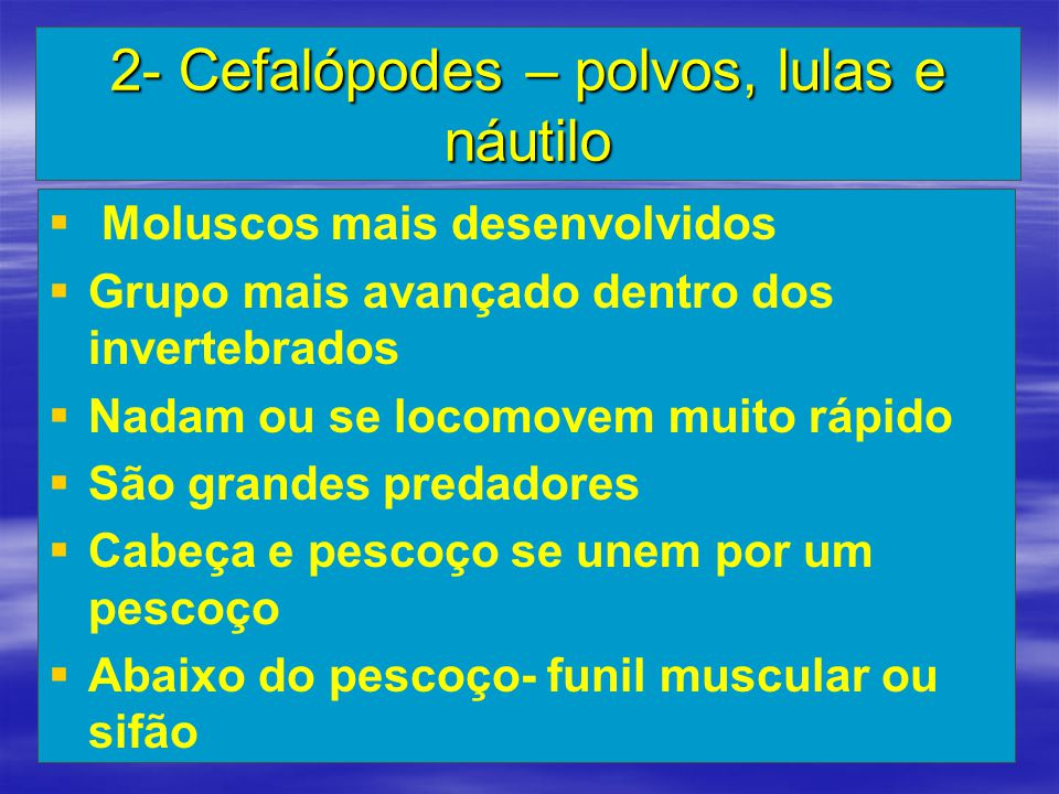 2- Cefalópodes – polvos, lulas e náutilo