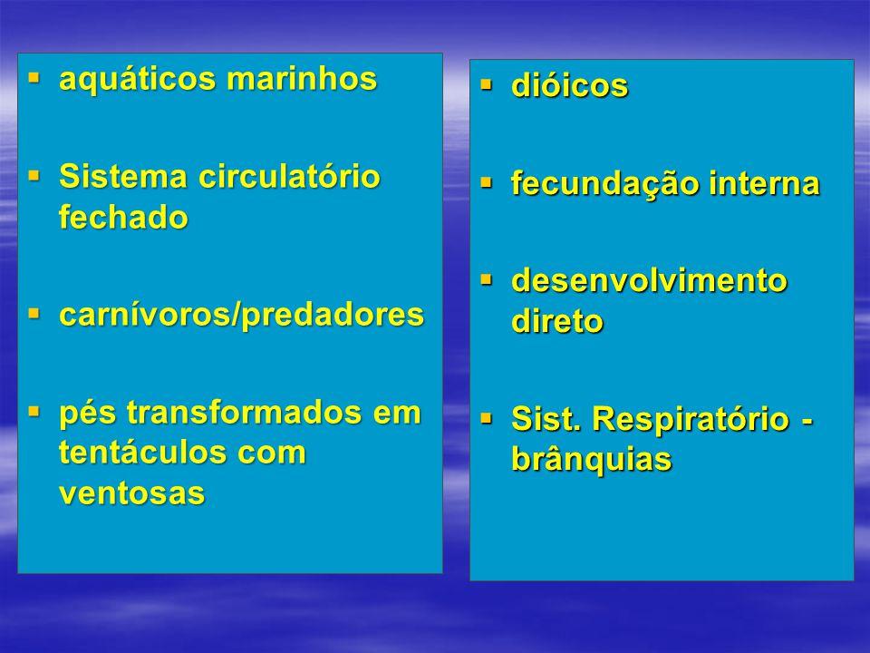 aquáticos marinhos Sistema circulatório fechado. carnívoros/predadores. pés transformados em tentáculos com ventosas.