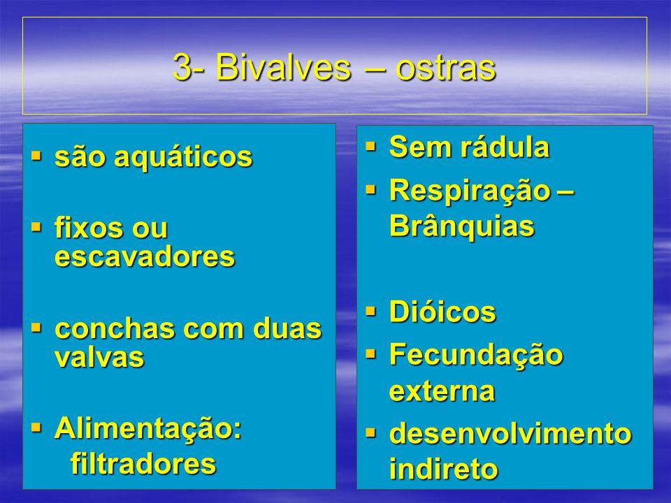 3- Bivalves – ostras são aquáticos fixos ou escavadores