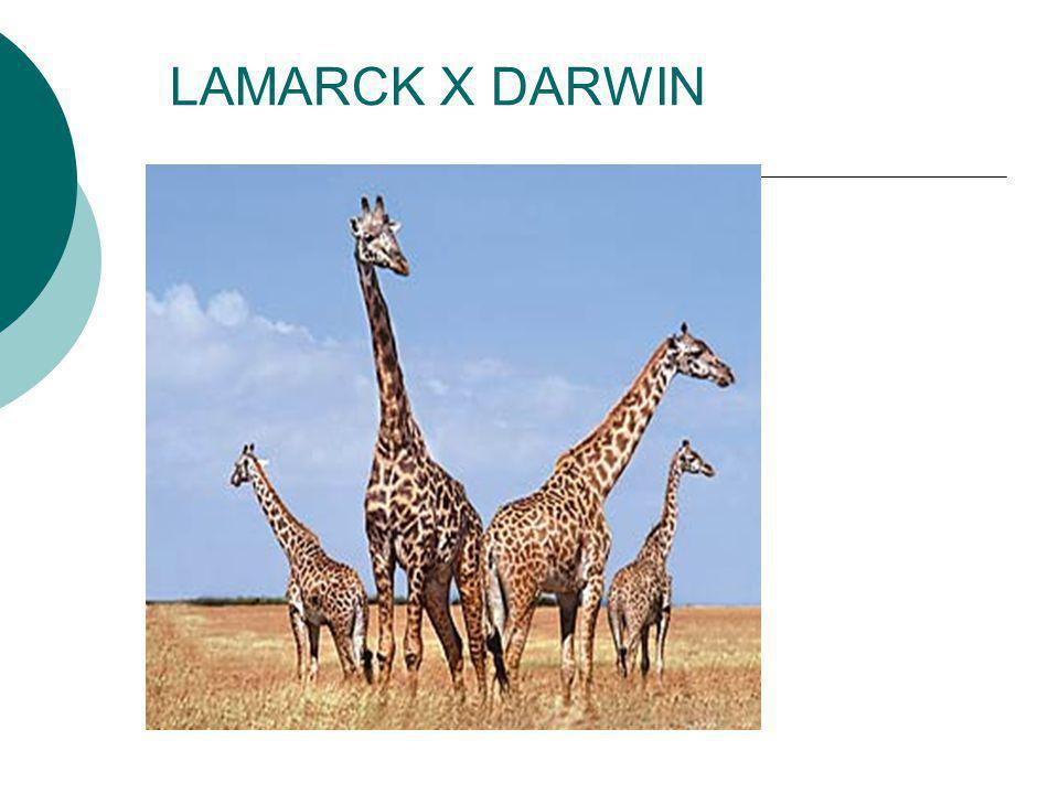 LAMARCK X DARWIN