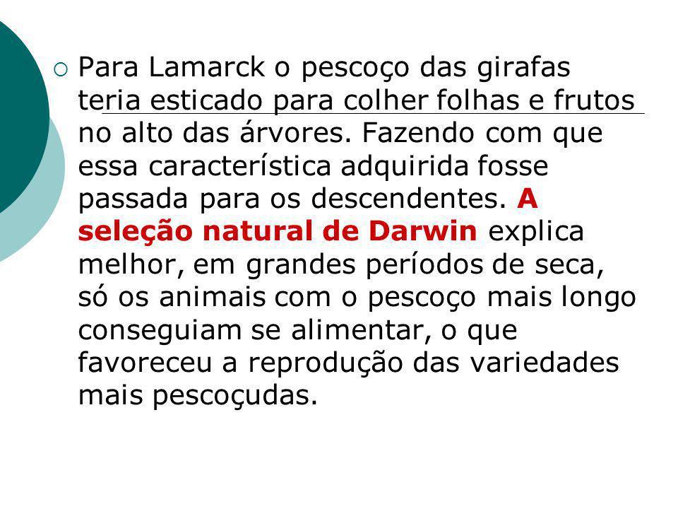 Para Lamarck o pescoço das girafas teria esticado para colher folhas e frutos no alto das árvores.