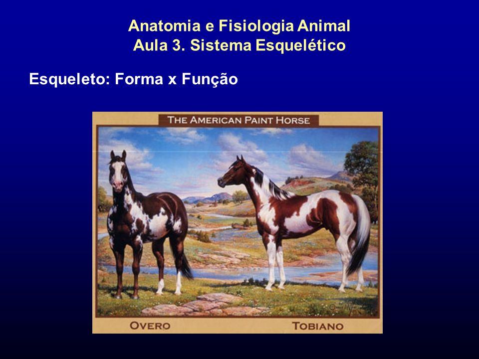 Anatomia e Fisiologia Animal Aula 3. Sistema Esquelético