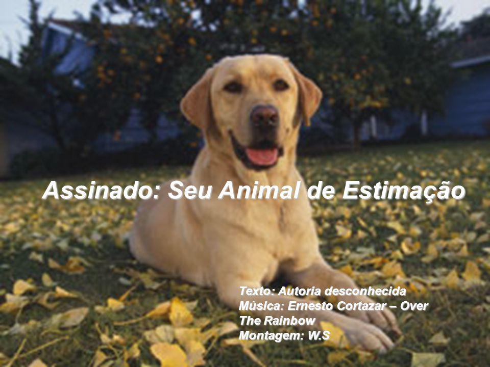 Assinado: Seu Animal de Estimação