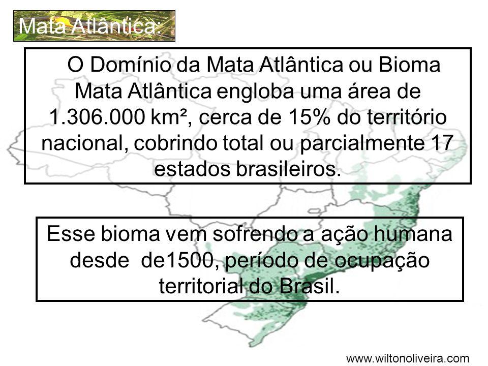 Mata Atlântica: