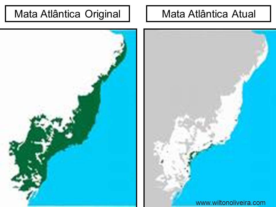 Mata Atlântica Original
