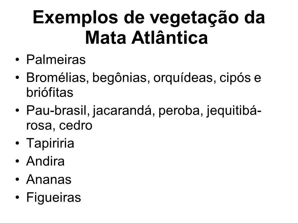 Exemplos de vegetação da Mata Atlântica