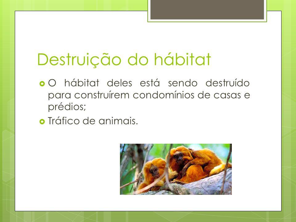 Destruição do hábitat O hábitat deles está sendo destruído para construírem condomínios de casas e prédios;
