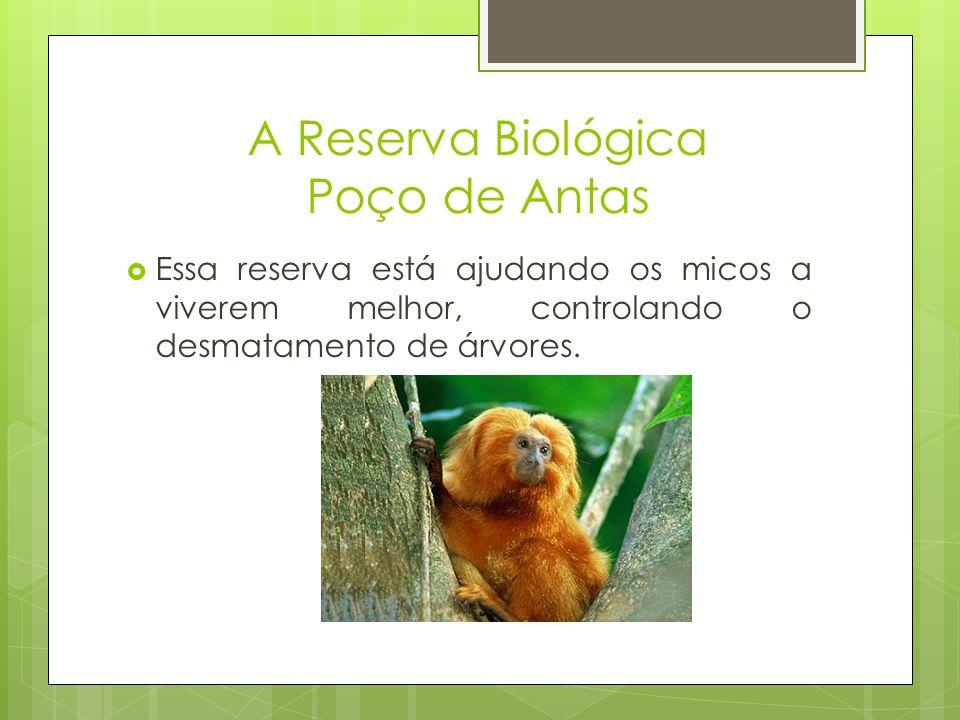 A Reserva Biológica Poço de Antas