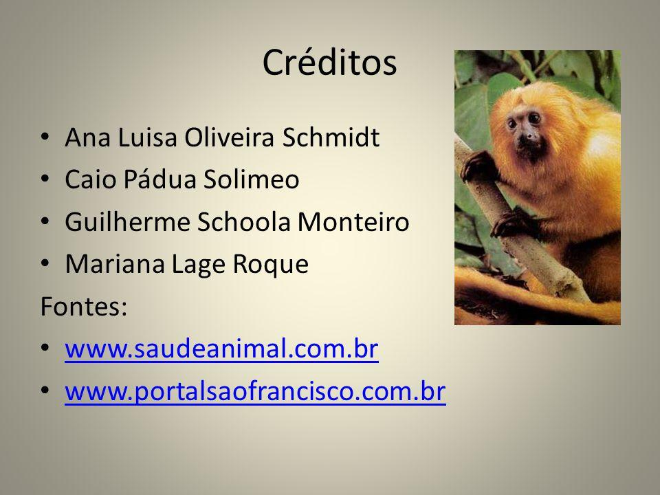 Créditos Ana Luisa Oliveira Schmidt Caio Pádua Solimeo