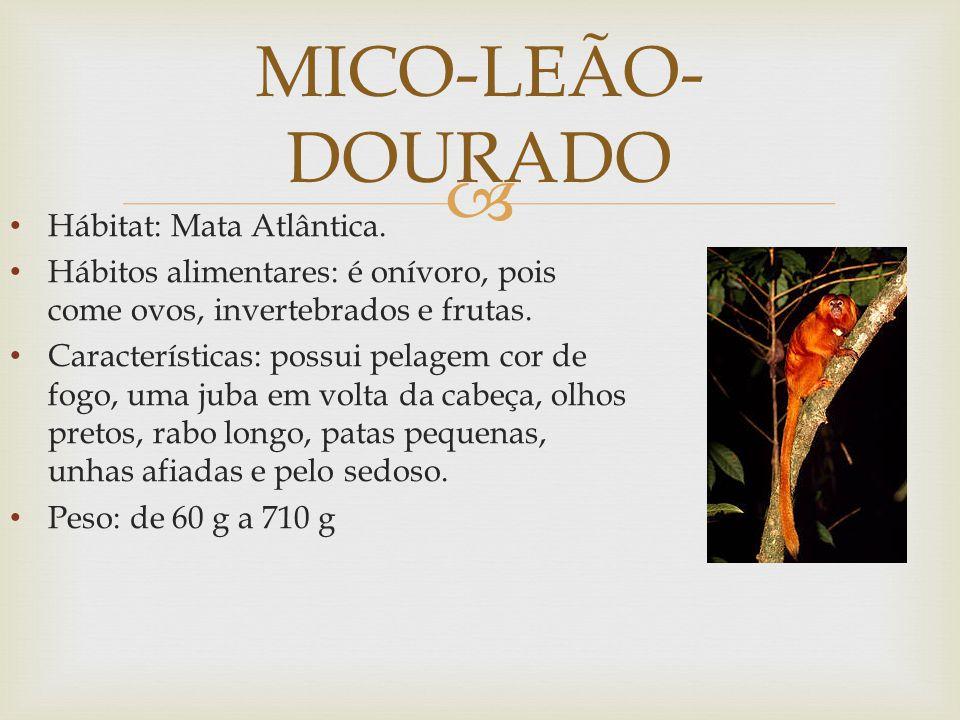 MICO-LEÃO- DOURADO Hábitat: Mata Atlântica.