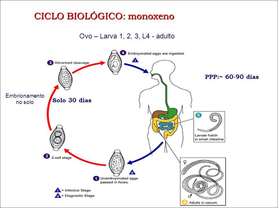 CICLO BIOLÓGICO: monoxeno