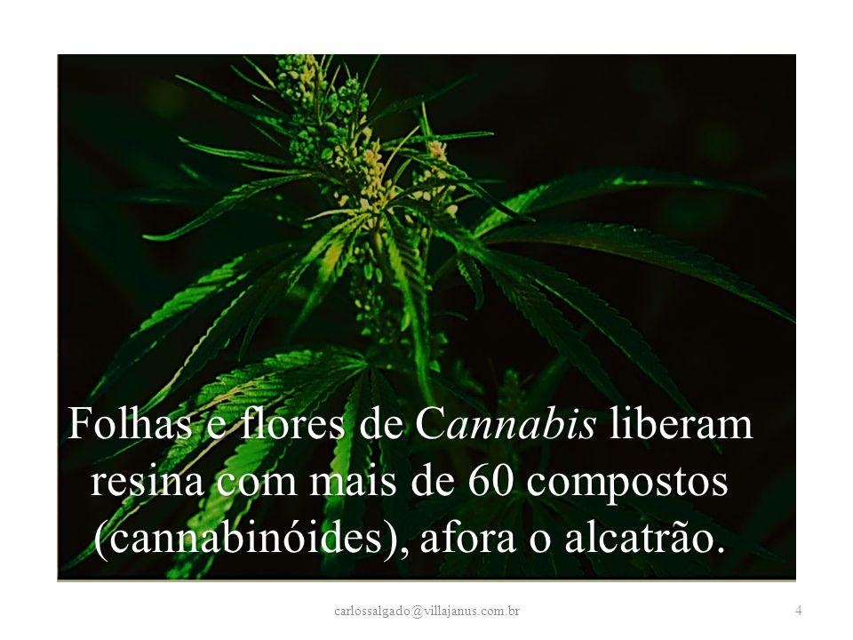 Folhas e flores de Cannabis liberam resina com mais de 60 compostos (cannabinóides), afora o alcatrão.