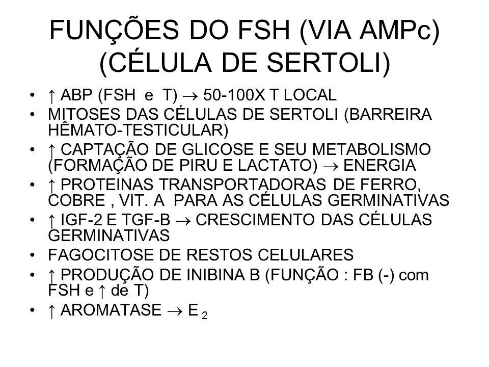 FUNÇÕES DO FSH (VIA AMPc) (CÉLULA DE SERTOLI)
