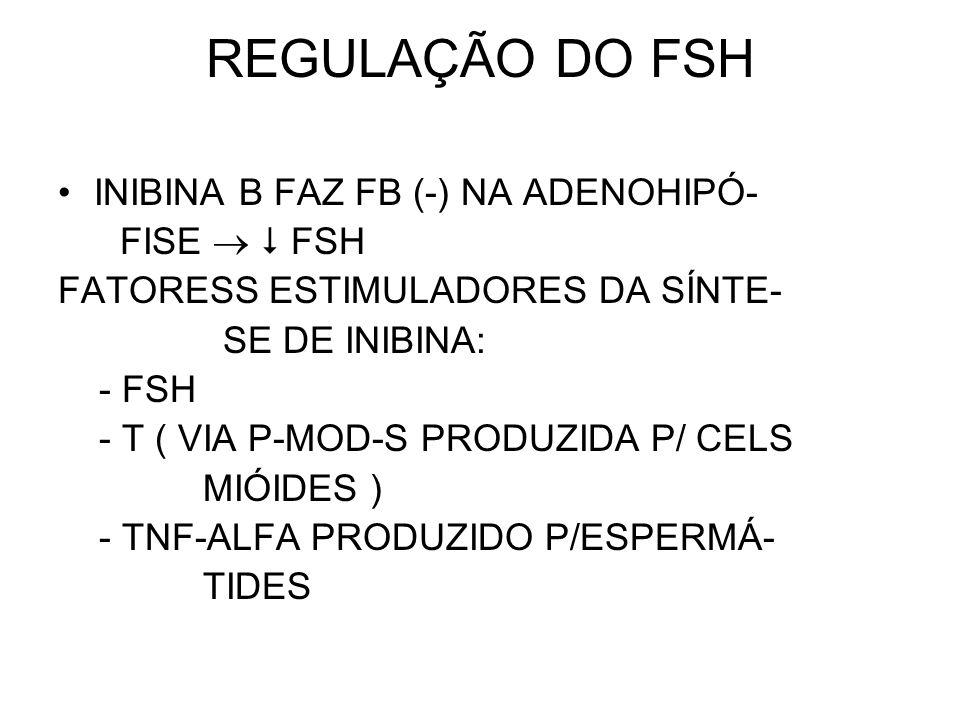 REGULAÇÃO DO FSH INIBINA B FAZ FB (-) NA ADENOHIPÓ- FISE   FSH