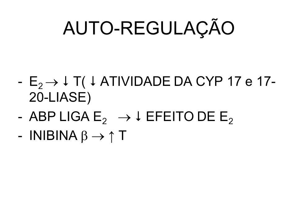 AUTO-REGULAÇÃO E2   T(  ATIVIDADE DA CYP 17 e 17-20-LIASE)