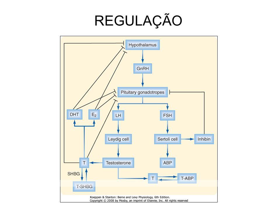 REGULAÇÃO 15