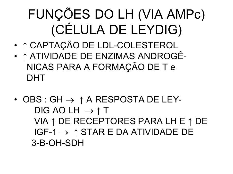 FUNÇÕES DO LH (VIA AMPc) (CÉLULA DE LEYDIG)