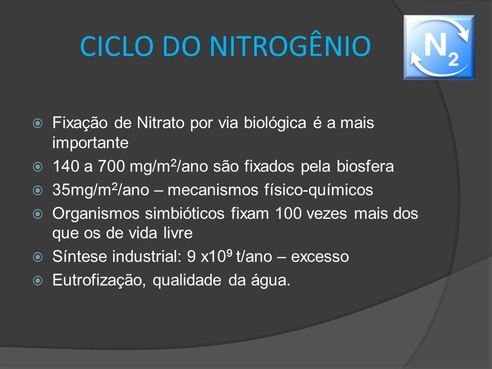 CICLO DO NITROGÊNIO Fixação de Nitrato por via biológica é a mais importante. 140 a 700 mg/m2/ano são fixados pela biosfera.