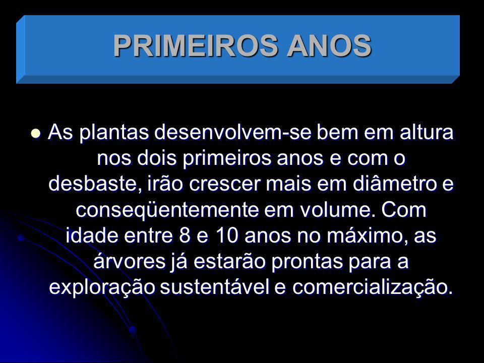 PRIMEIROS ANOS