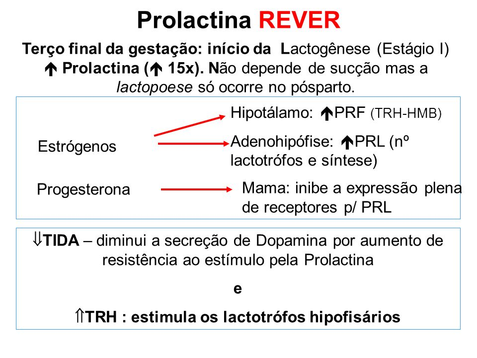 TRH : estimula os lactotrófos hipofisários