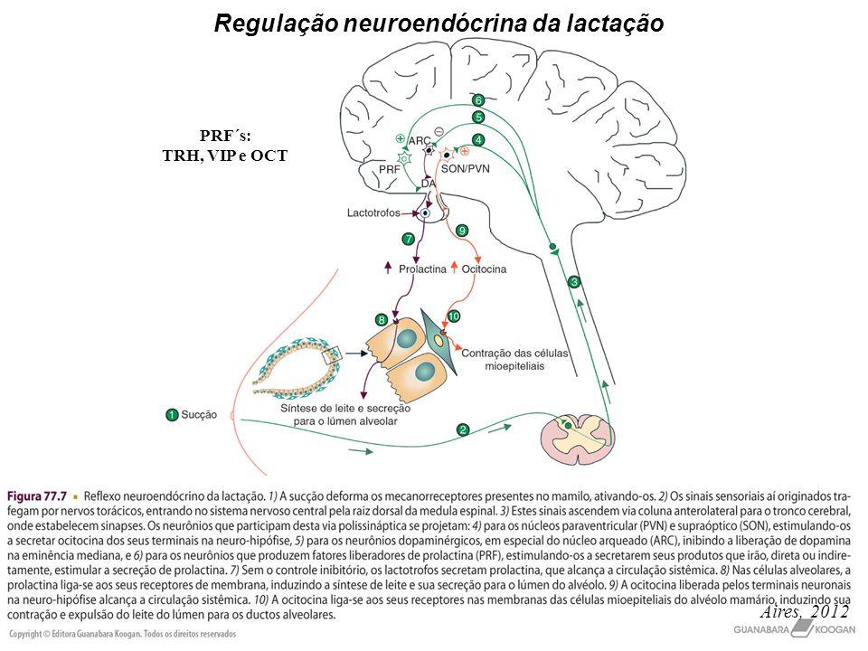 Regulação neuroendócrina da lactação
